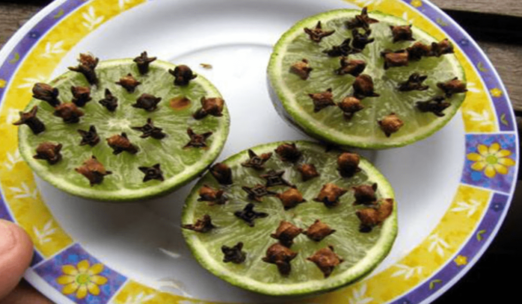 التخلص من الذباب المنزلي بالقرنفل بداخل الليمون