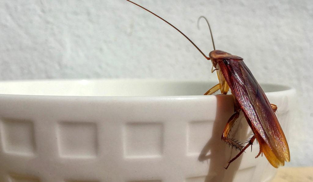 أهم نصائح للتخلص من الحشرات المنزلية