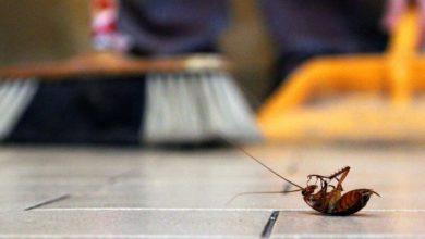 كيفية التخلص من الحشرات المنزلية؟ 3 طرق رخيصة أمنة للقضاء عليها نهائيًا